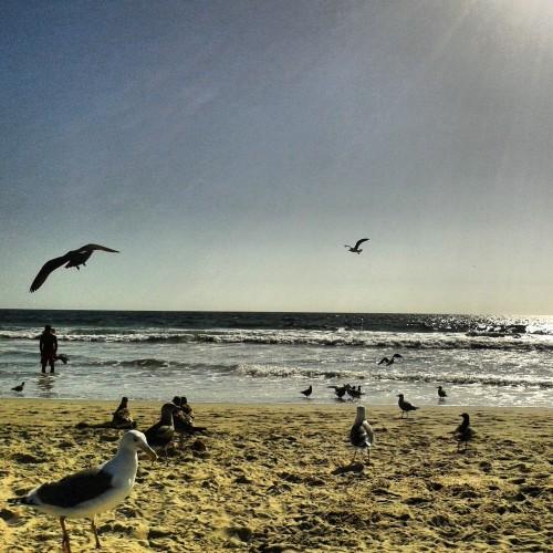 blog voyages,venice beach