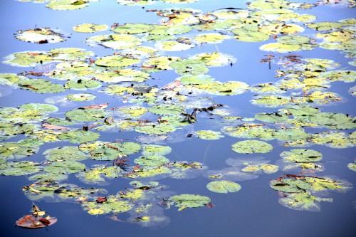 thalasseo,les étangs de corot,caudalie,spa caudalie,thalasseo les étangs de corot,blog voyage,blog beauté,week-end détente proximité paris,rémi chambard