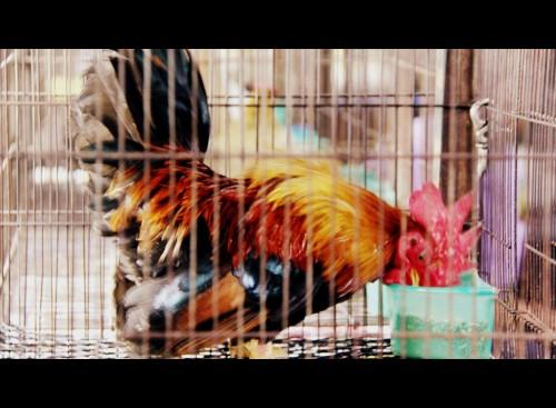 bangkok,thailande,the jim thompson house blog voyage,wat phra kaew,chatuchak,chatuchak market